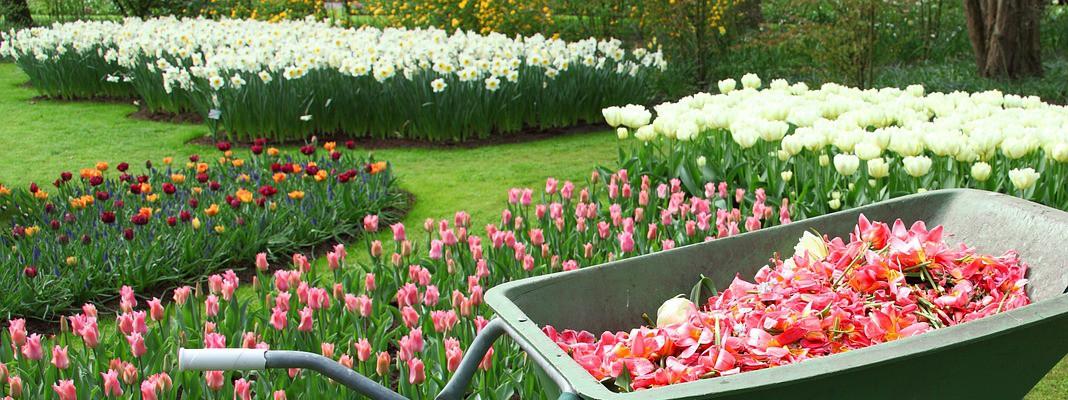 Chi è il garden designer, artista del verde