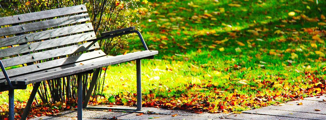 Consigli per la manutenzione del verde in vista dell'autunno