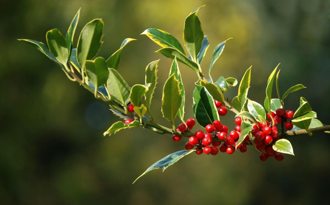 Piante invernali da esterno – alcuni consigli per il tuo giardino