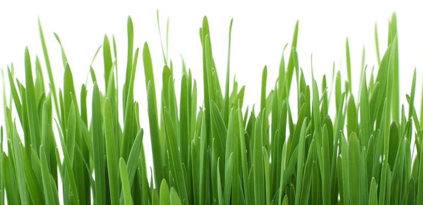 Come tagliare erba giardino, alcuni consigli pratici!