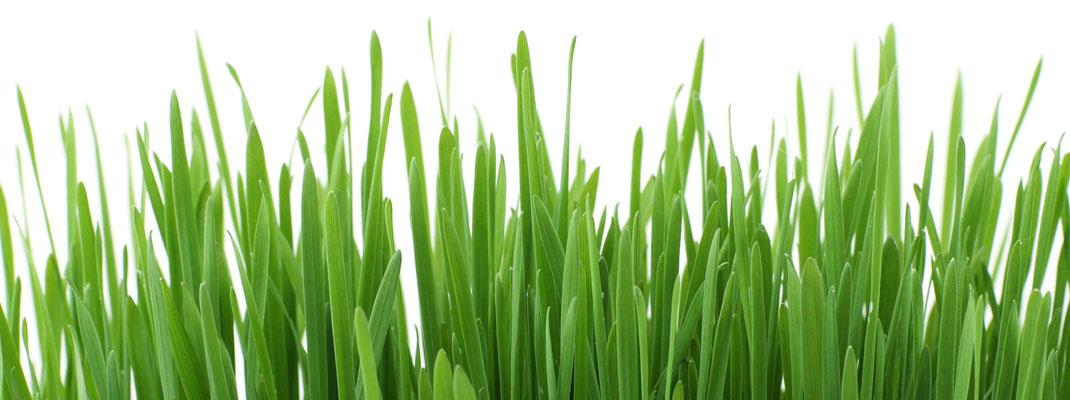 Come tagliare erba giardino sul blog di Atelierdimensioneverde.it