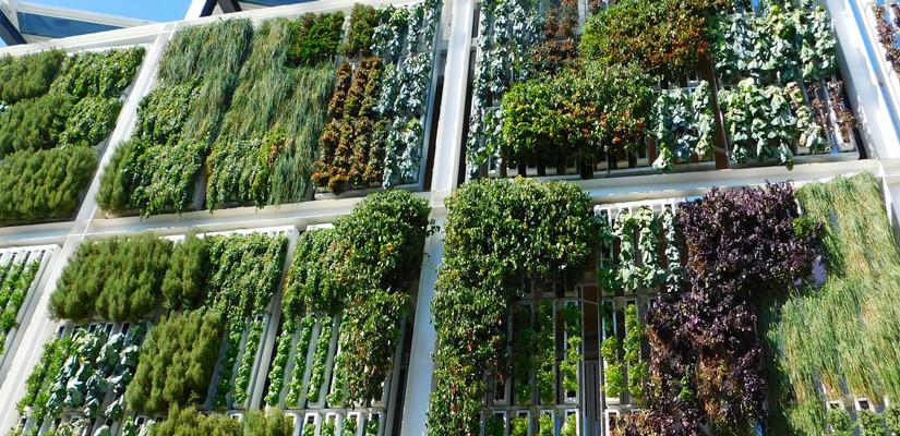 Giardini verticali esterni: colorare la città con la natura!