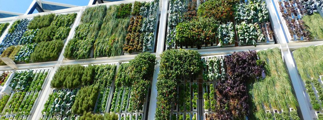 Giardini verticali esterni sul blog di Atelierdimensioneverde.it