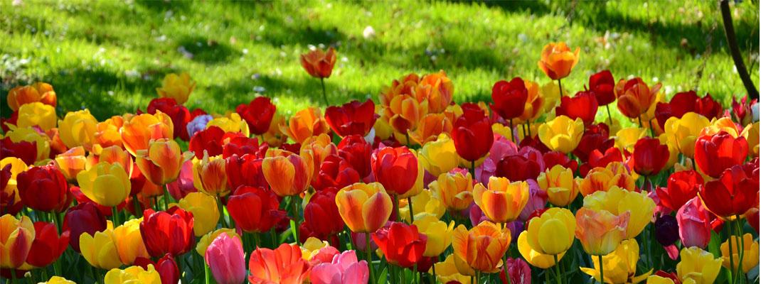 Progettare il giardino sul blog di Atelierdimensioneverde.it