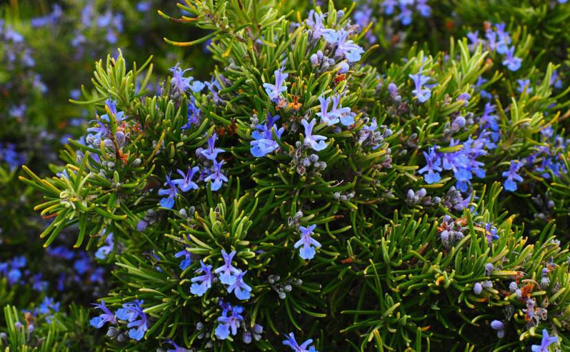 Piante per giardino mediterraneo: scopriamole insieme!