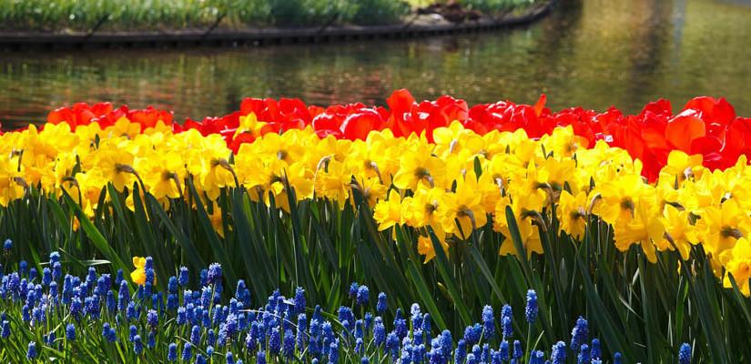 Giardini sensoriali: spazi verdi che coinvolgono tutti e cinque i sensi